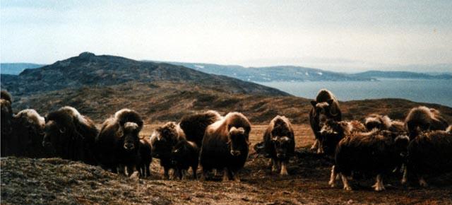 8 films sur la vie sauvage canadienne