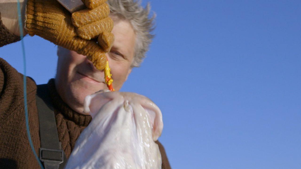 Cette pêche durable fait grimper le prix du poisson à Terre-Neuve | Doc à voir
