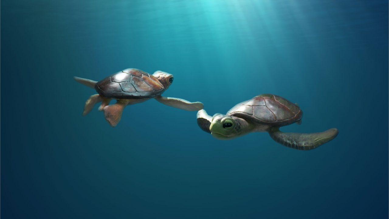 Mini-leçon – Une histoire de tortues