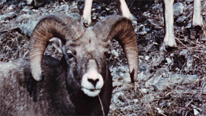 #MonONF : Merveilles de la faune